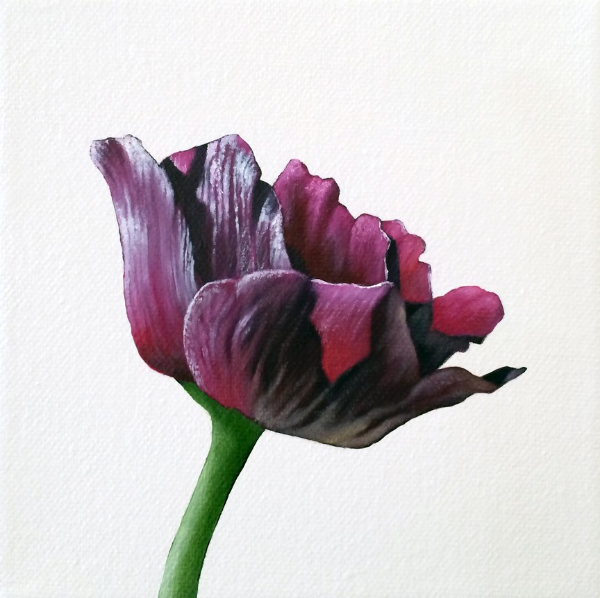 """Anemone II"" original fine art by Jelaine Faunce"