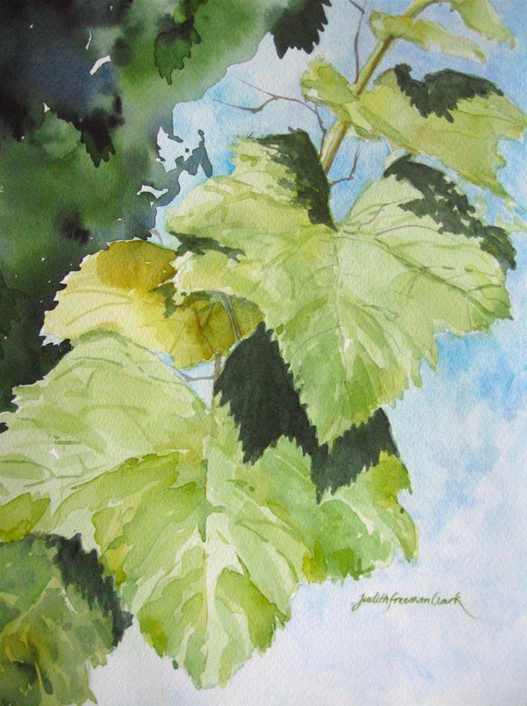 """Vineyard Shadows, study"" original fine art by Judith Freeman Clark"