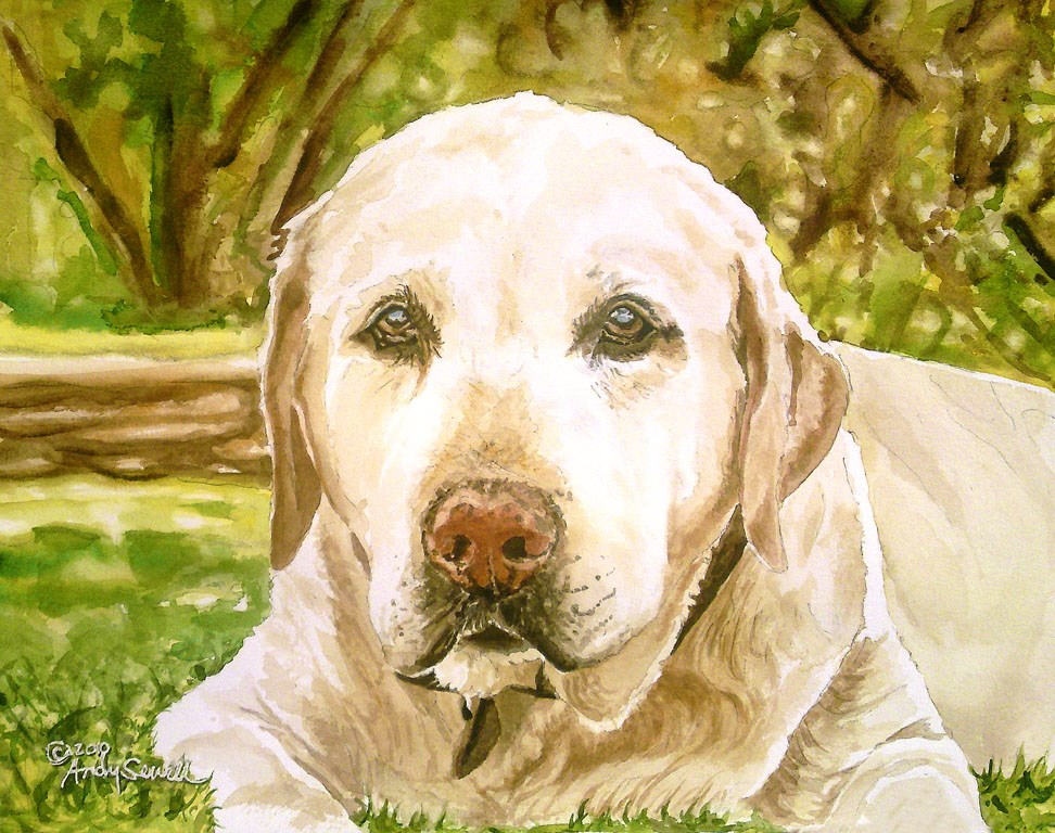 """My Old Yellow Lab"" original fine art by Andy Sewell"