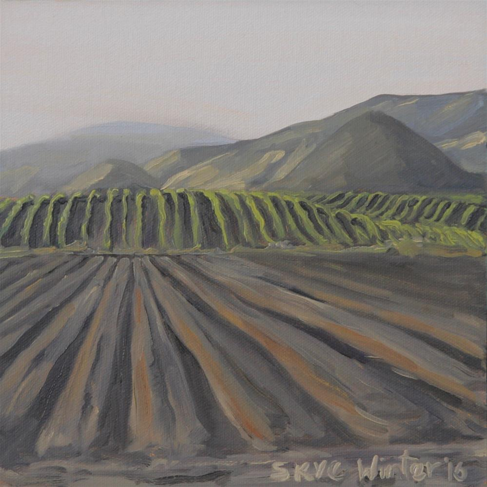 """Furrows"" original fine art by Skye Coddington"