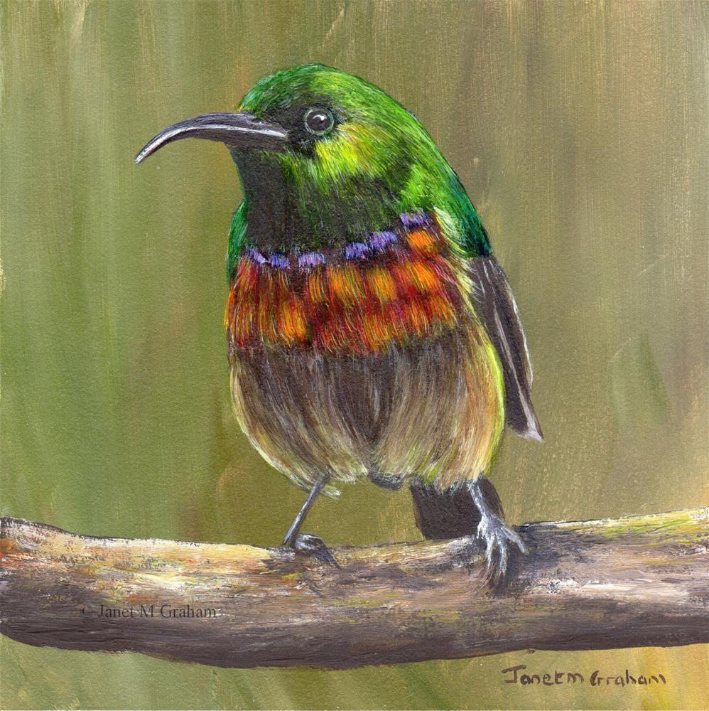 """Forest Double Collared Sunbird"" original fine art by Janet Graham"