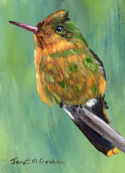 """""""Tufted Coquette ACEO"""" original fine art by Janet Graham"""