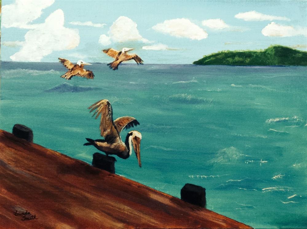 """""""Brown Pelicans"""" original fine art by Brenda Smith"""