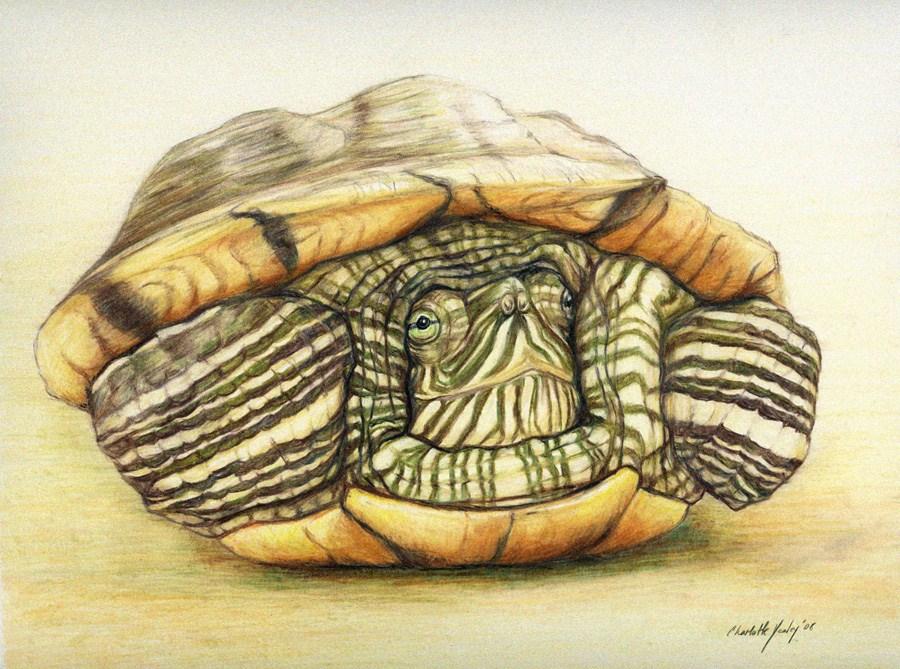 """Turtle"" original fine art by Charlotte Yealey"