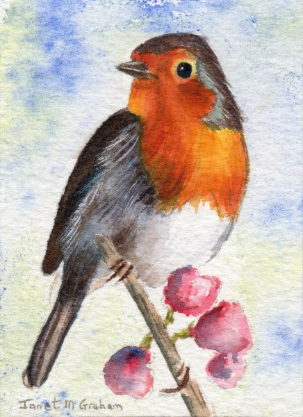 """Robin ACEO"" original fine art by Janet Graham"