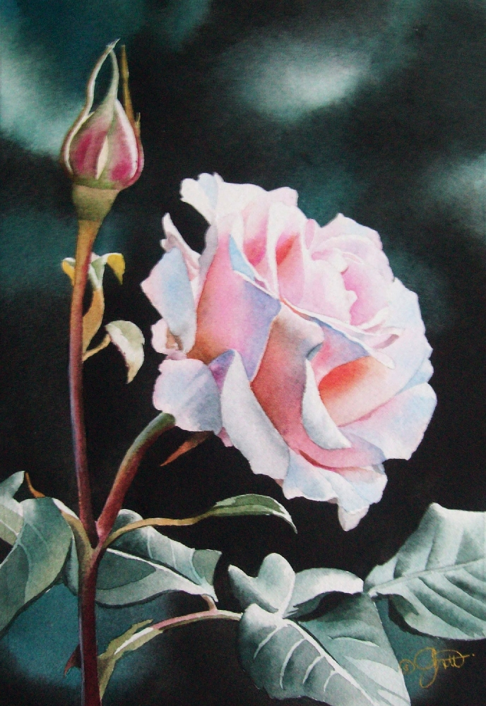 """Pink Rose in Morning Light"" original fine art by Jacqueline Gnott, TWSA, WHS"