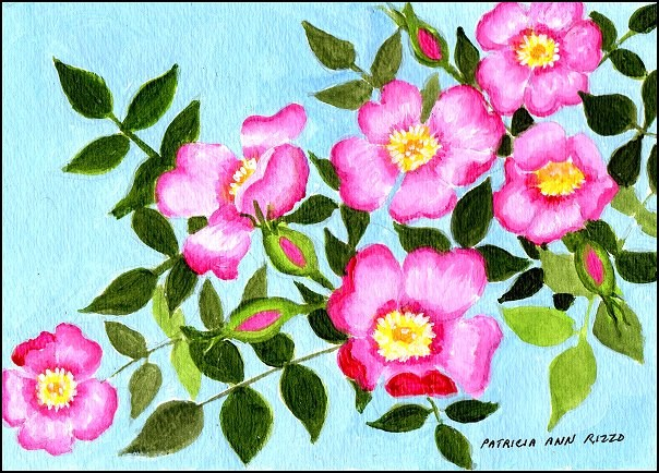 """Pink Wood Roses"" original fine art by Patricia Ann Rizzo"
