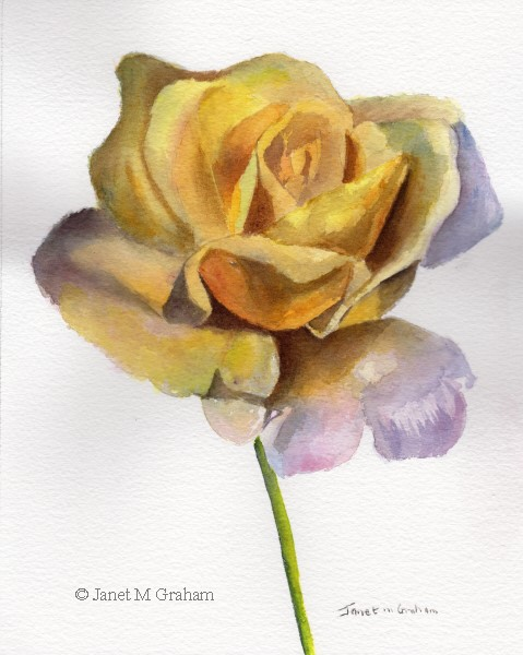 """Yellow Rose"" original fine art by Janet Graham"