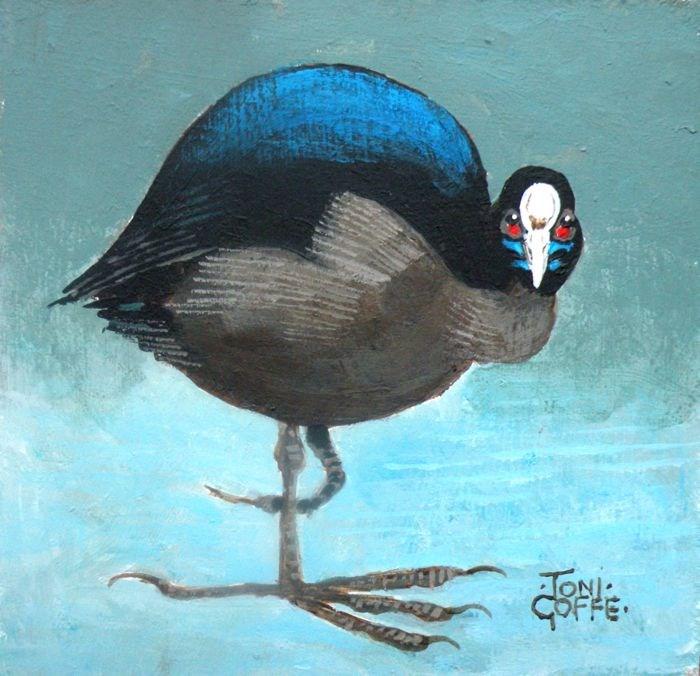 """Coot"" original fine art by Toni Goffe"
