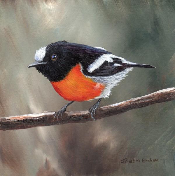 """Scarlet Robin No 7"" original fine art by Janet Graham"