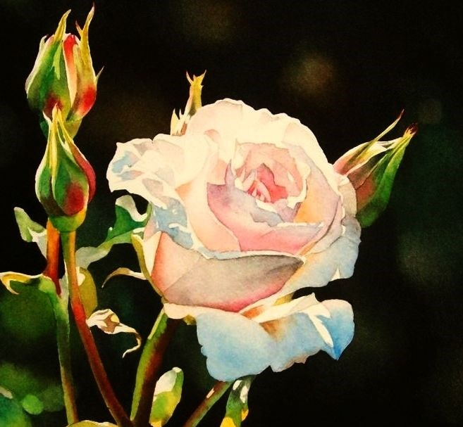 """Shell Pink Rose"" original fine art by Jacqueline Gnott, TWSA, WHS"