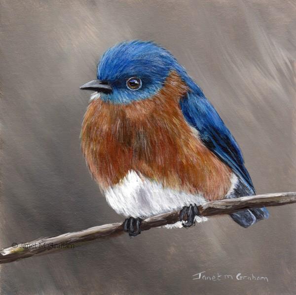 """Eastern Bluebird No 4"" original fine art by Janet Graham"