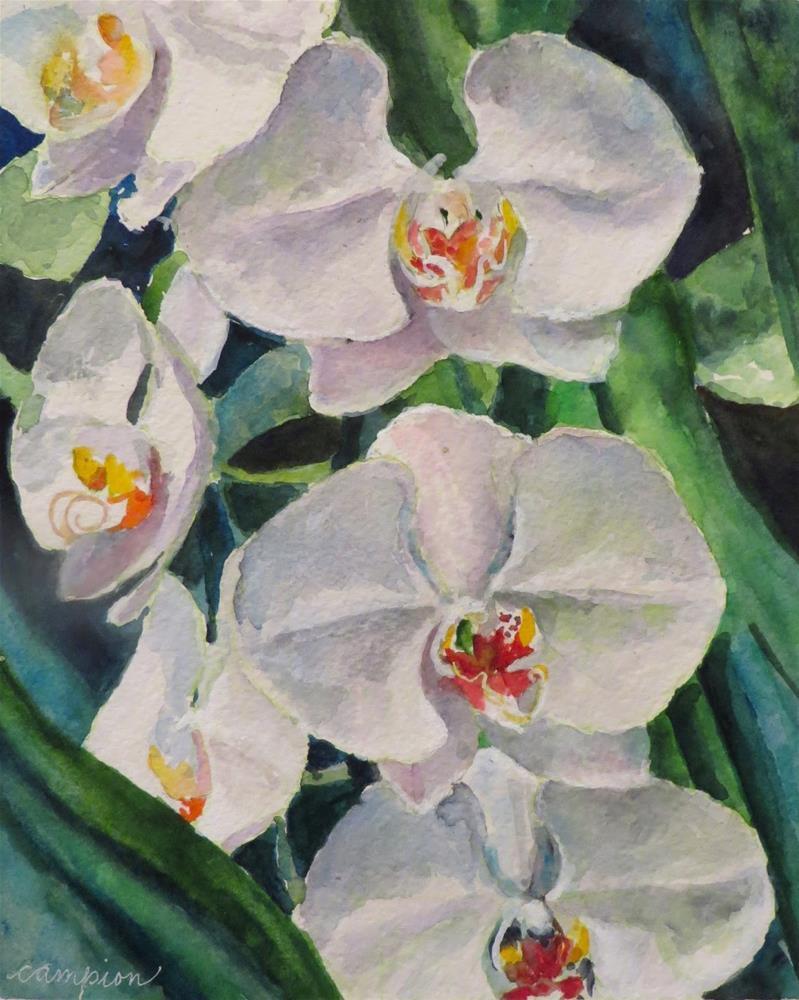 """815 White Phalaenopsis (Orchid)"" original fine art by Diane Campion"