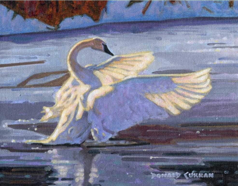 """Swan 2"" original fine art by Donald Curran"