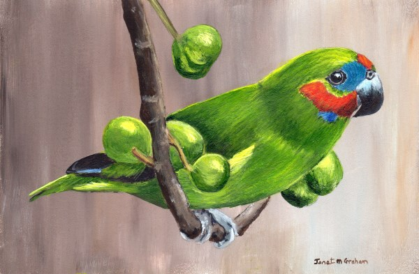 """Double Eyed Fig Parrot"" original fine art by Janet Graham"