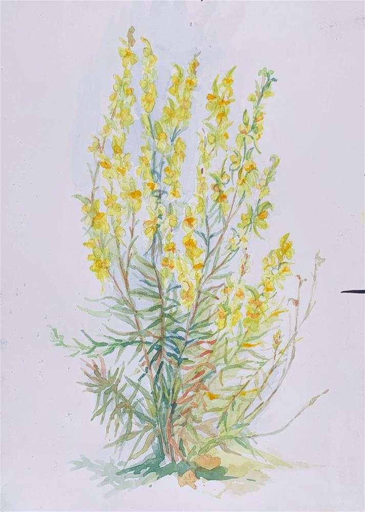"""""""Butter and Eggs - Linaria vulgaris"""" original fine art by Jean Krueger"""