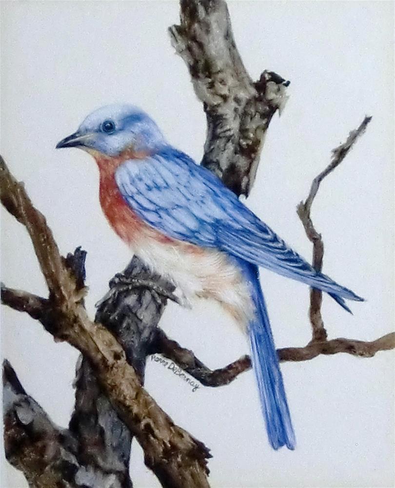 """""""Eastern Bluebird"""" original fine art by Jean Pierre DeBernay"""