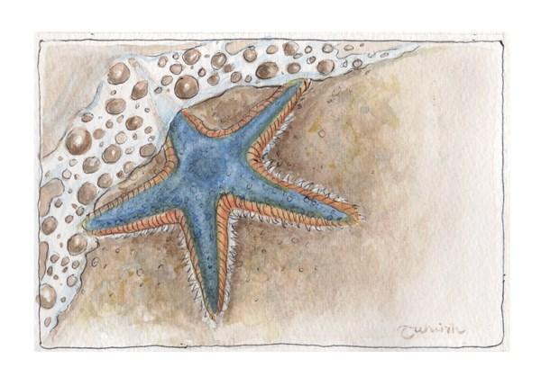 """""""Starfish Blue"""" original fine art by Tahirih Goffic"""