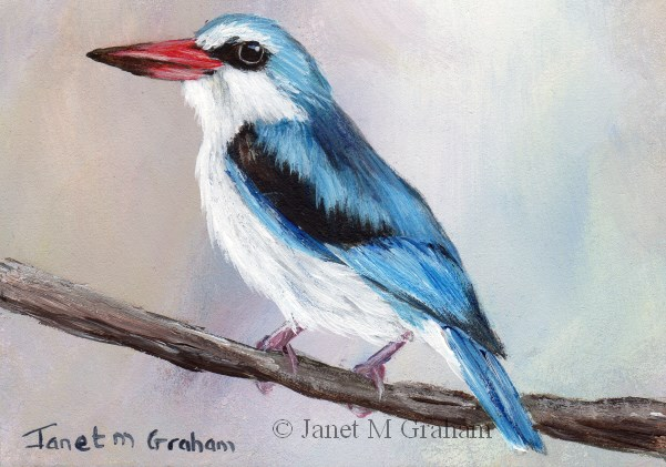 """""""Woodland Kingfisher ACEO"""" original fine art by Janet Graham"""