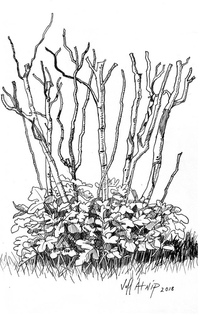 """Pruned Figs"" original fine art by Jeff Atnip"