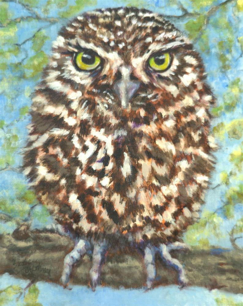 """""""Little Spotted Owl"""" original fine art by Carla Ridener"""