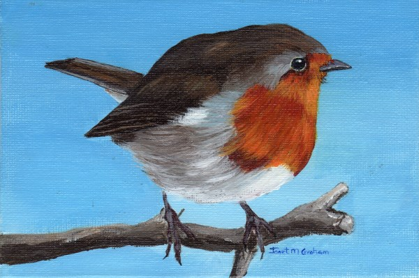 """Little Robin"" original fine art by Janet Graham"