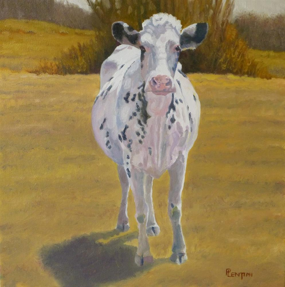 """""""Cow Series 6 Standing Pied"""" original fine art by Peter Lentini"""