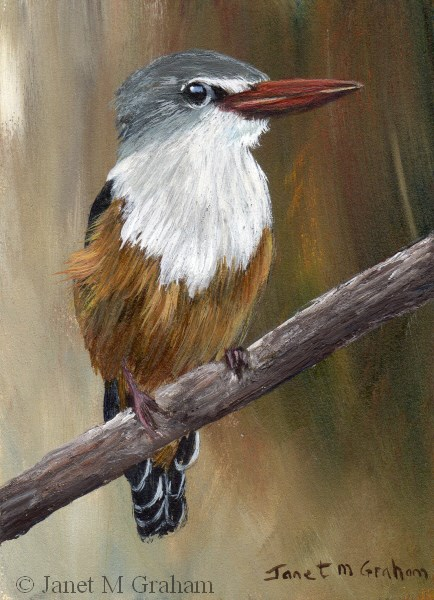 """""""Grey Headed Kingfisher ACEO"""" original fine art by Janet Graham"""