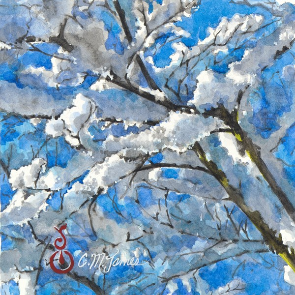"""""""Snowy Branches in the Sunlight #2"""" original fine art by Catherine M. James"""