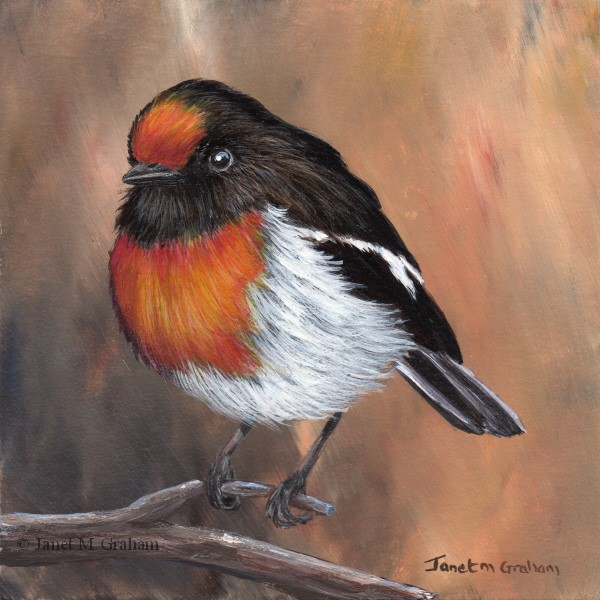 """Red Capped Robin No 4"" original fine art by Janet Graham"