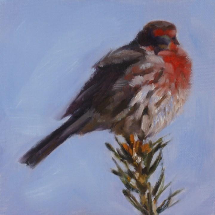 """Red Finch"" original fine art by Pamela Poll"