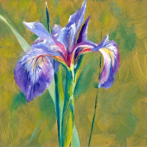 """Wild Iris"" original fine art by Brenda Ferguson"