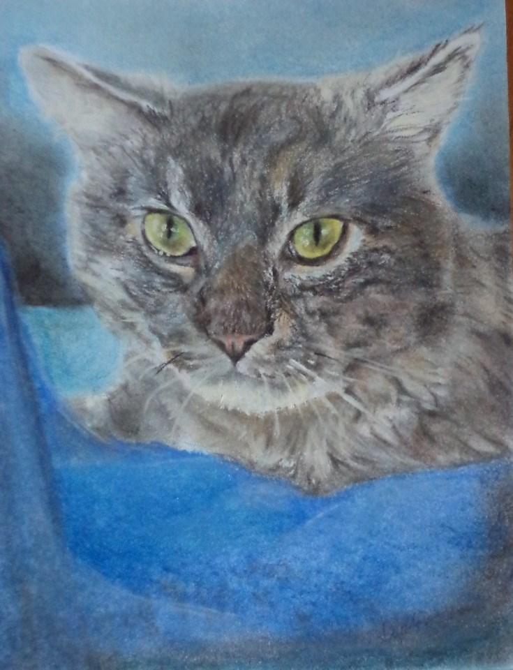 """Gray kitty and blanket"" original fine art by tara stephanos"