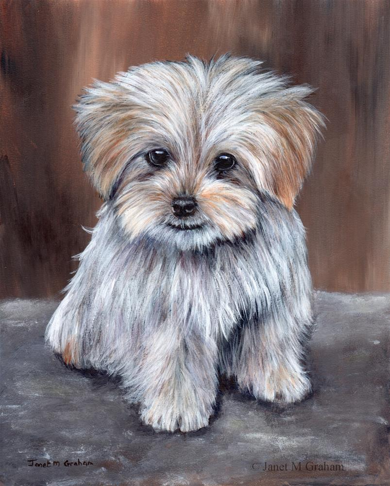 """Maltese Pup"" original fine art by Janet Graham"