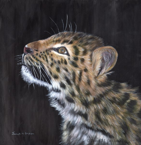 """Amur Leopard Cub"" original fine art by Janet Graham"