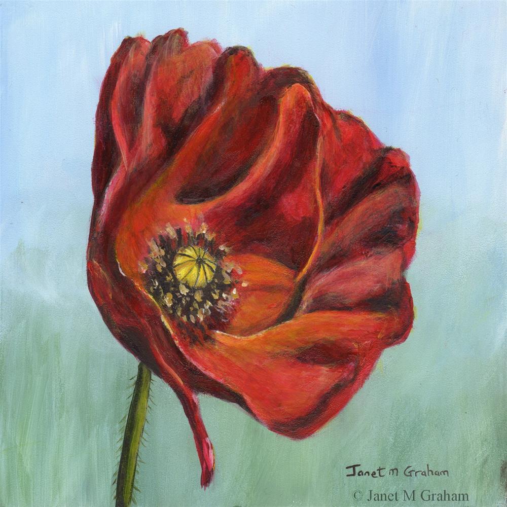 """Poppy"" original fine art by Janet Graham"