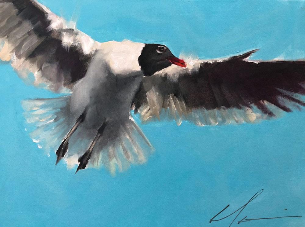 """""""Laughing Gull"""" original fine art by Clair Hartmann"""