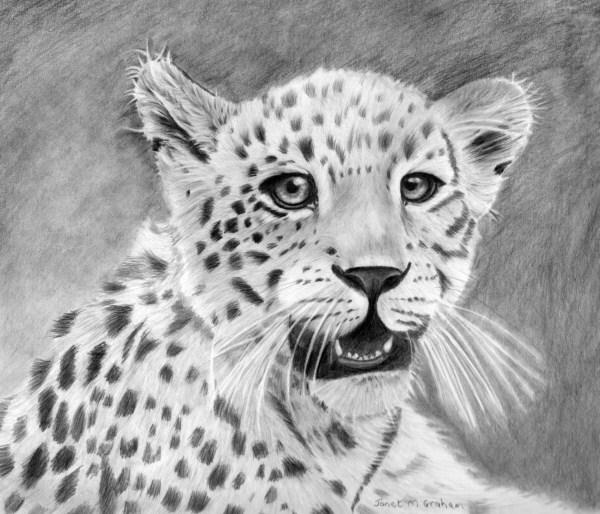 """Leopard Cub"" original fine art by Janet Graham"