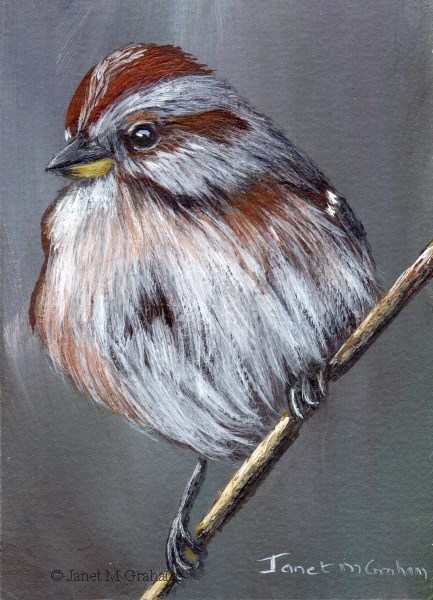 """""""American Tree Sparrow ACEO"""" original fine art by Janet Graham"""