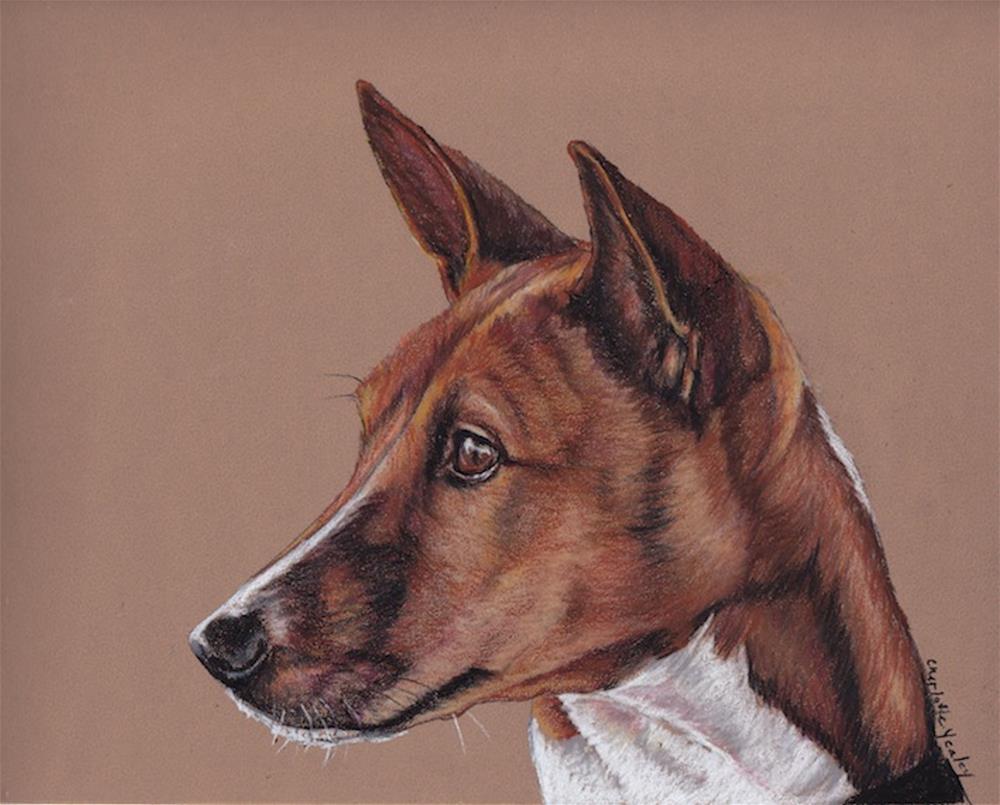 """""""Basenji"""" original fine art by Charlotte Yealey"""