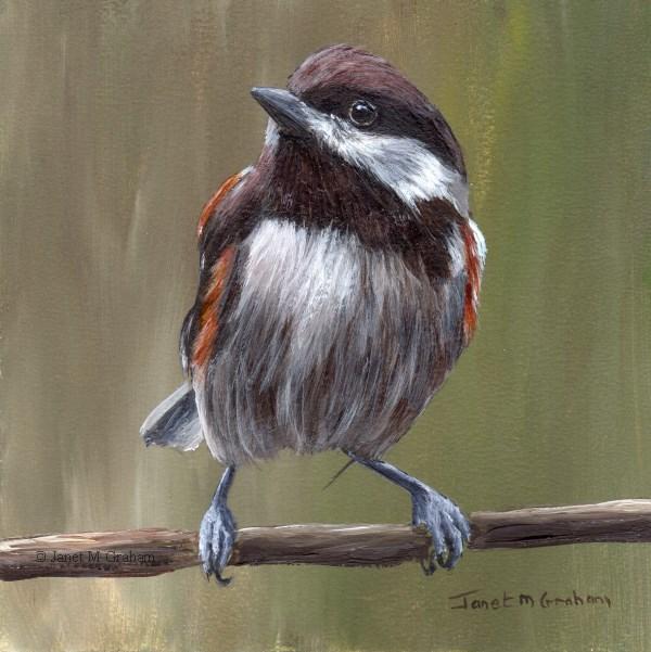 """Chestnut Backed Chickadee No 3"" original fine art by Janet Graham"