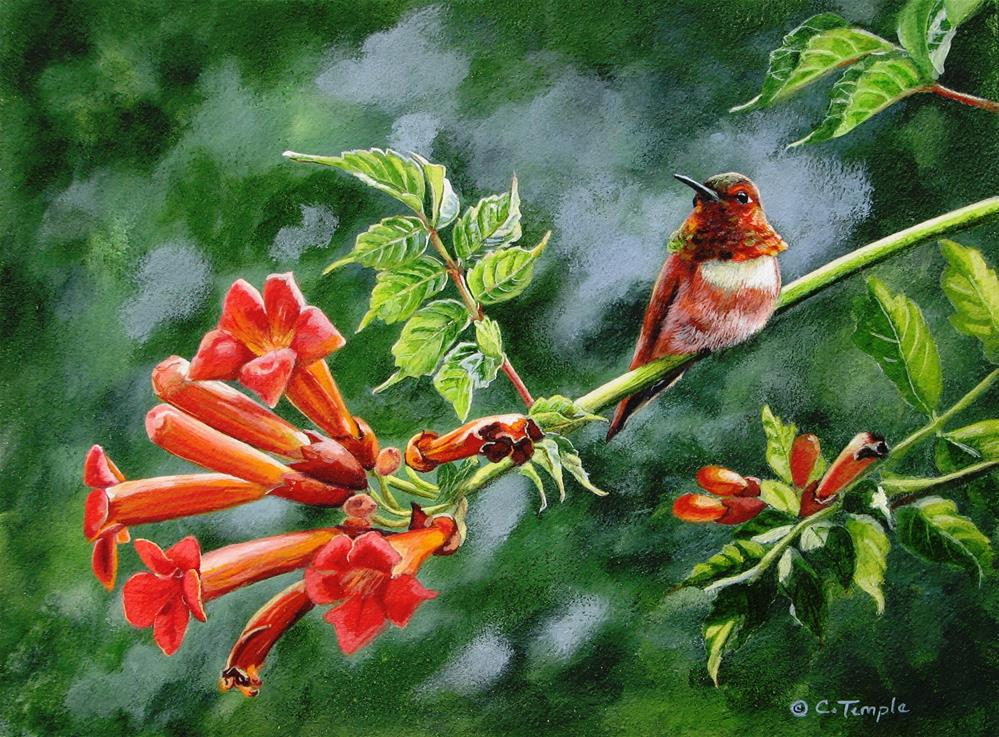 """Rufous and Trumpetvine"" original fine art by Catherine Temple"