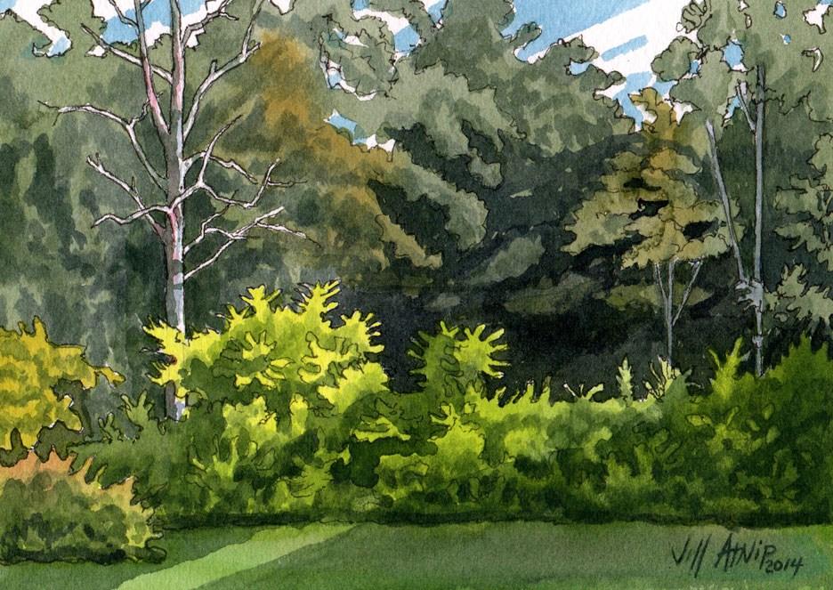 """Backyard Study"" original fine art by Jeff Atnip"