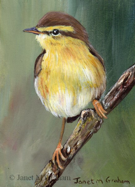 """Willow Warbler ACEO"" original fine art by Janet Graham"
