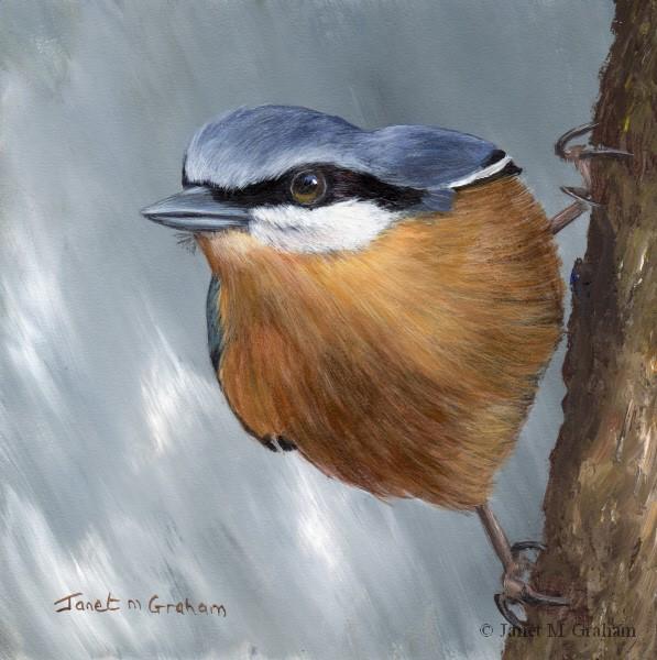 """Nuthatch No 4"" original fine art by Janet Graham"