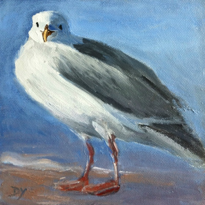 """""""Ogden Point Seagull, oil on canvas board, 6x6"""" original fine art by Darlene Young"""