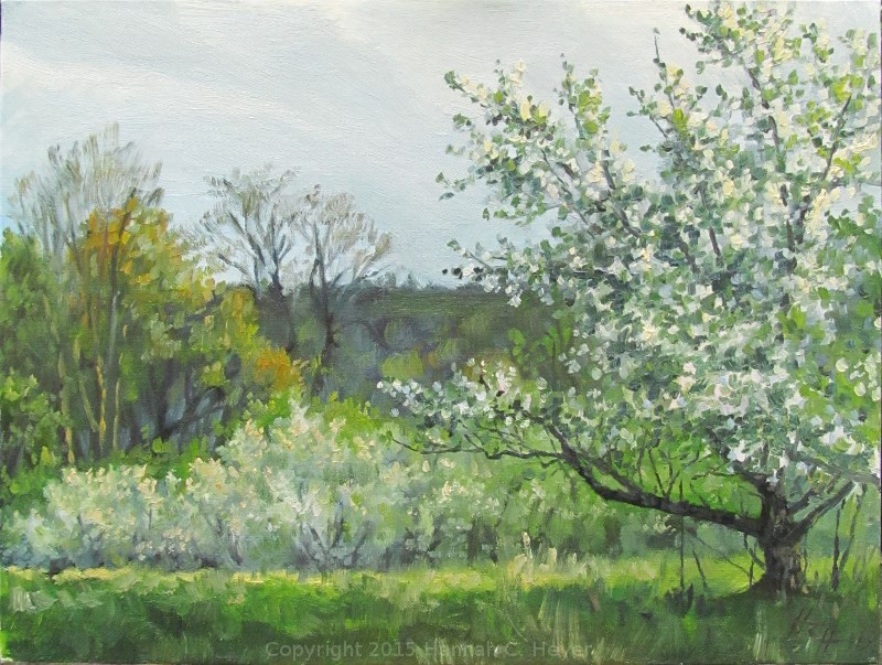 """Apple Blossoms in the Evening"" original fine art by Hannah C. Heyer"