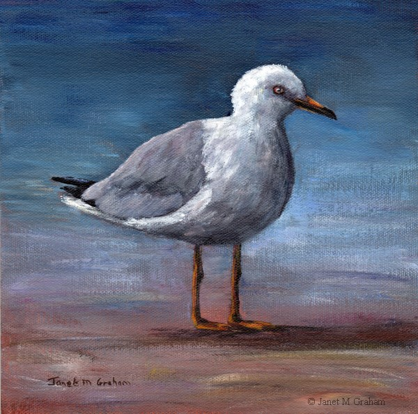 """Seagull"" original fine art by Janet Graham"