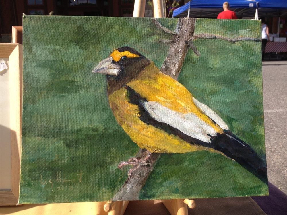 """""""Evening Grosbeak"""" original fine art by Lucy Hammett"""