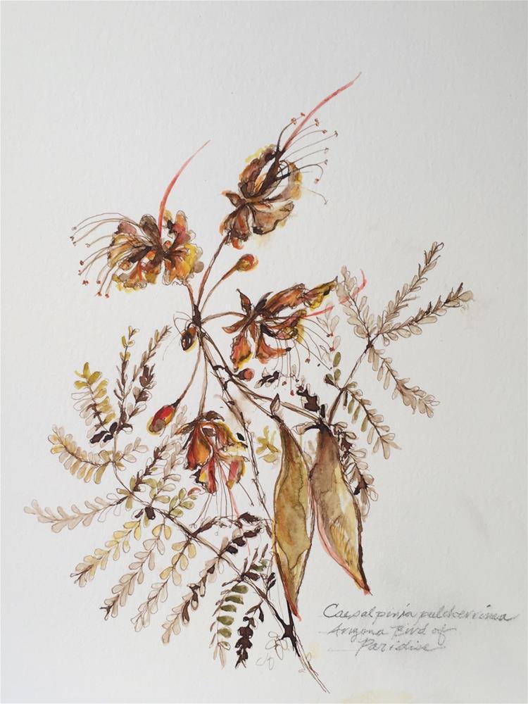 """ArizonaBird of Paradise"" original fine art by Jean Krueger"
